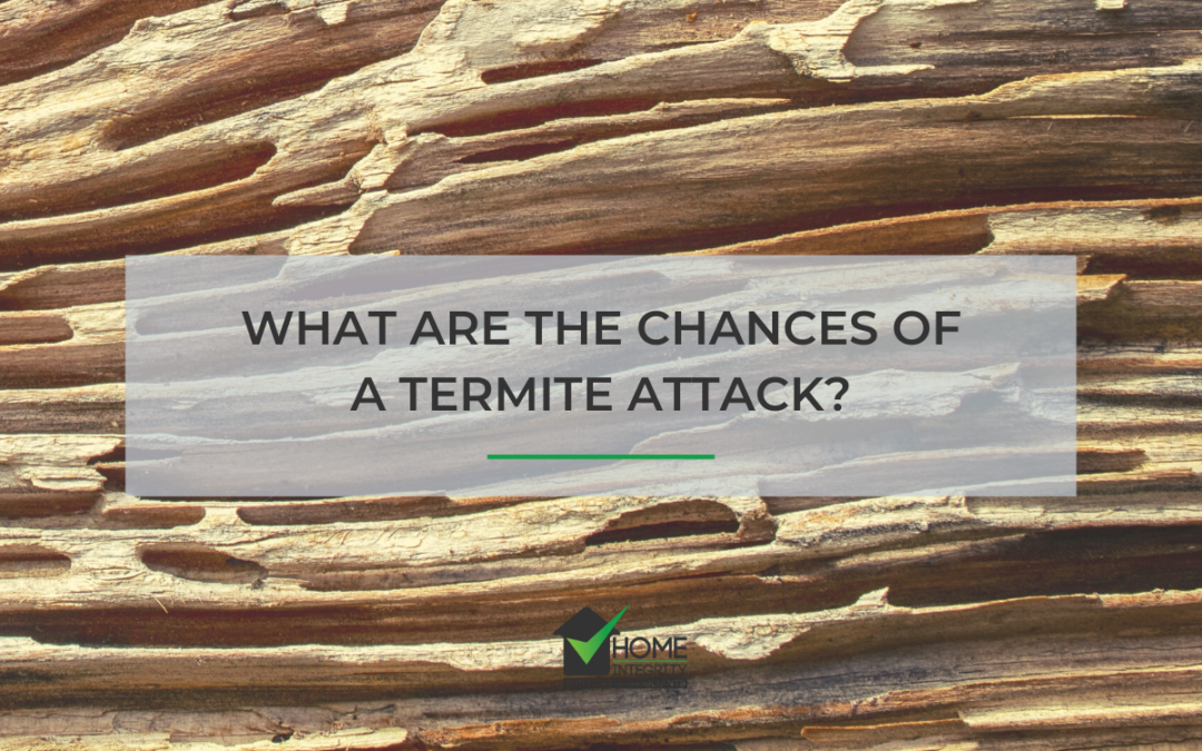 What are the chances of a termite attack?