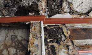 Termite nest material in wall and roof