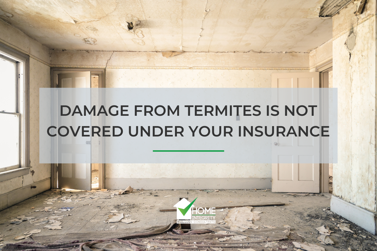 Damage from termites is not covered under your insurance
