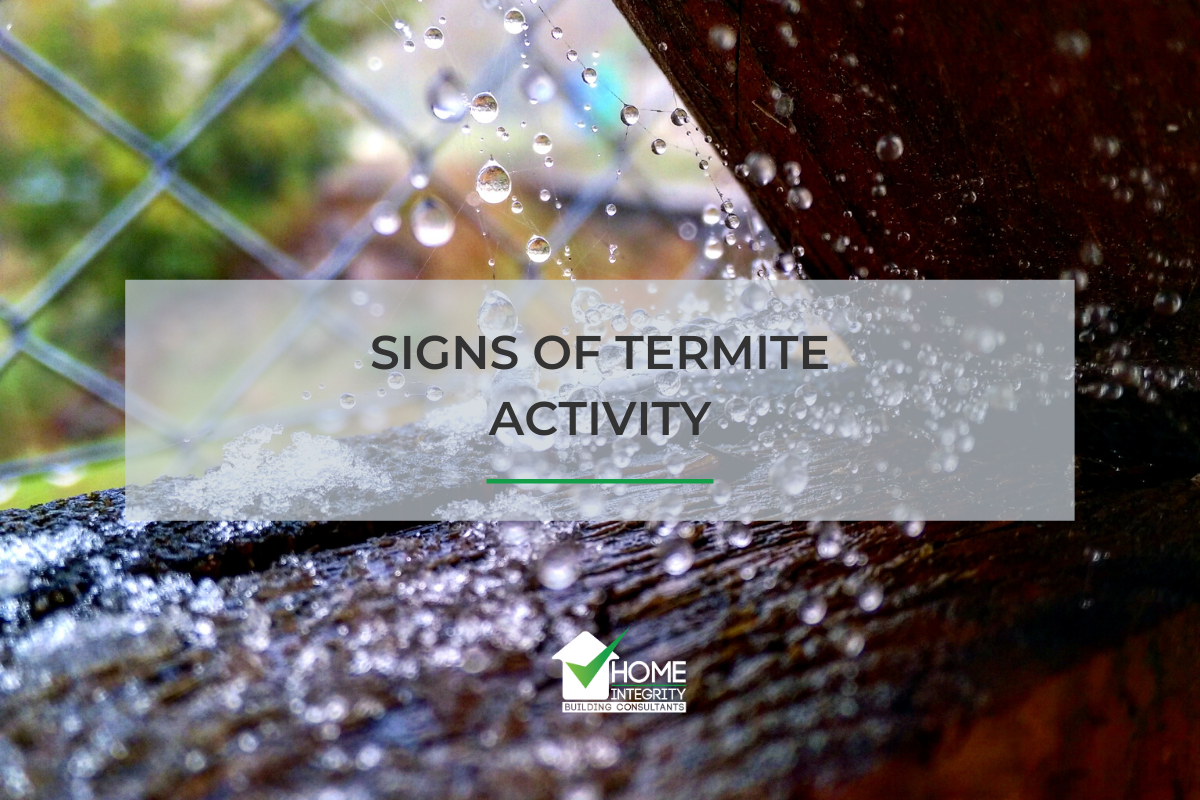 Signs of Termite Activity